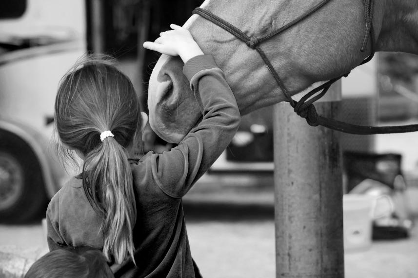 horse secret copy